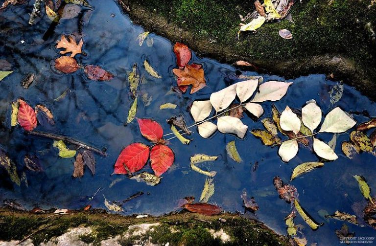 Leaves in narrow stream
